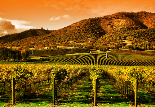 Napa Valley - California