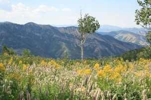 Wild flowers in abundance throughout Scare Canyon.